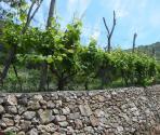 Prodotti tipici (Ph: Provincia di Savona)
