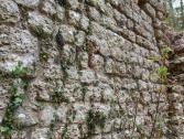 Ponti romani (Ph: Provincia di Savona)