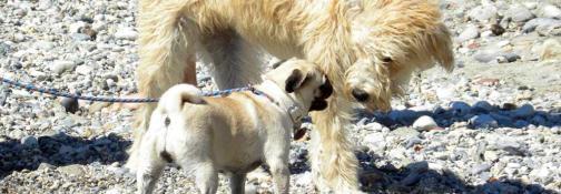 Spiagge Dog Welcome (Ph: Rescigno-Merlo)