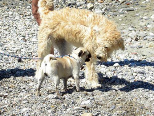 Spiagge per cani (Ph: Rescigno-Merlo)