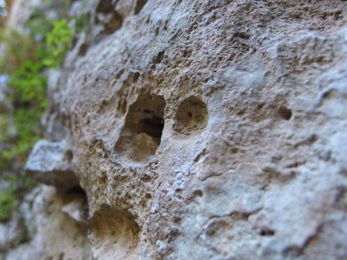 Roccia calcarea (Ph: Provincia di Savona)
