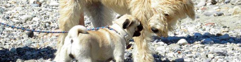 Dog beaches (Ph: Rescigno-Merlo)